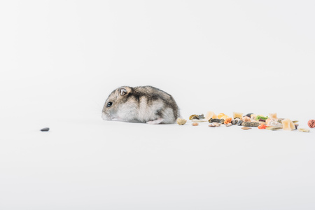 Photo for funny hamster near dry pet food on grey background with copy space - Royalty Free Image