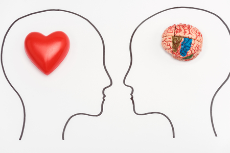 Photo for heads with human brain and red heart isolated on white - Royalty Free Image