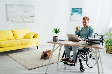 Photo pour Disabled man with laptop and cup and french bulldog in living room - image libre de droit