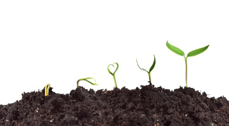 Photo pour Plant germination and growth - love for nature concept with heart shaped seedling - image libre de droit