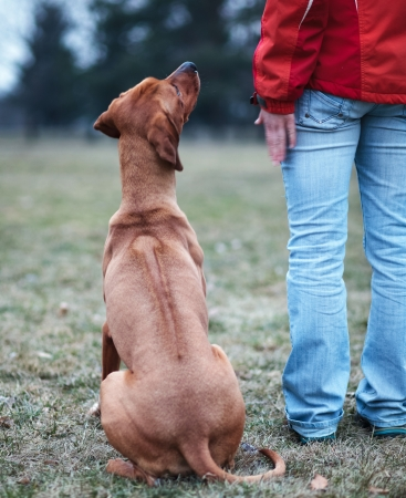 Photo for Master and her obedient (rhodesian ridgeback) dog - Royalty Free Image