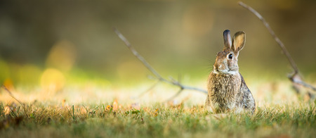 Photo for Cute rabbit in grass - Royalty Free Image