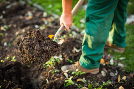 Photo for Gardening - man digging the garden soil with a spud (shallow DOF; selective focus) - Royalty Free Image