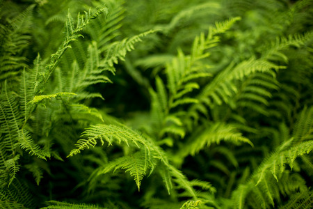 Photo for Fern - Royalty Free Image