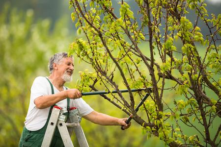 Foto de Senior man gardening in his garden (color toned image) - Imagen libre de derechos
