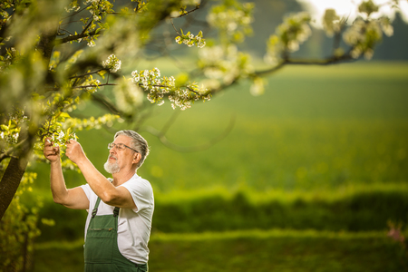Foto de Portrait of senior man gardening, taking care of his lovely orchard, ejoying actively his retirement - Imagen libre de derechos