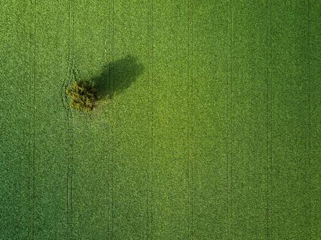 Photo pour Lovely green filed aerial photo - image libre de droit