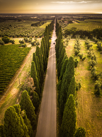 Photo for Cypress alley with rural country road, Tuscany, Italy - Royalty Free Image