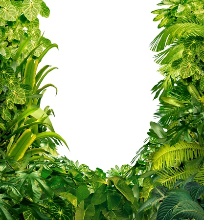 Photo for Tropical jungle as a blank frame with rich green plants as ferns and palm tree leaves found in southern hot climates as south America  Hawaii and Asia with a white isolated copy space center  - Royalty Free Image