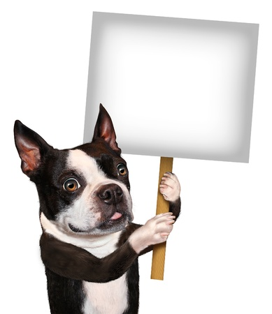 Dog holding a blank sign as a Boston Terrier with a smiling happy expression advertising and communicating a message pertaining to pet care and veterinary issues on white