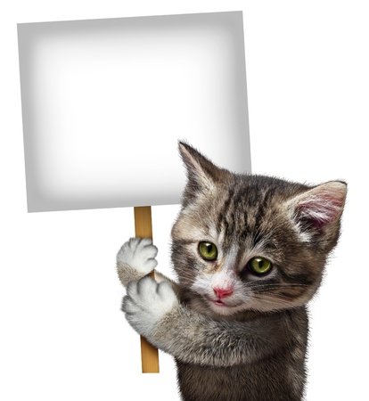 Cat holding a blank card sign as a cute kitten feline with a smiling happy expression supporting and communicating a message pertaining to pet care on an isolated white background
