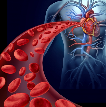 Foto de Heart blood health with red cells flowing through three dimensional veins from the human circulatory system representing a medical health care symbol of cardiology and cardiovascular fitness  - Imagen libre de derechos
