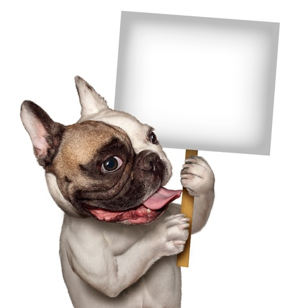 Bull Dog holding a blank white sign as a French Bulldog with a smiling happy expression supporting and communicating a message pertaining to pet products and animal care or veterinary services