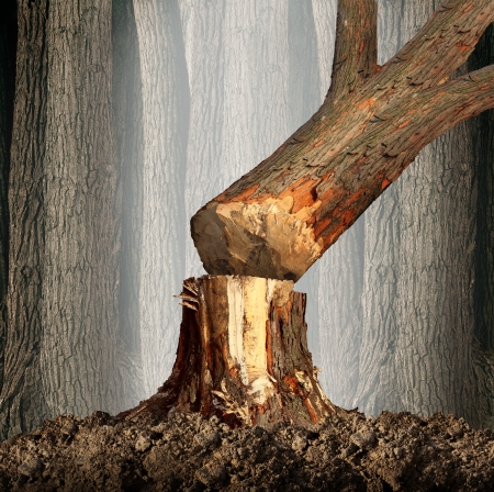 Photo for Deforestation concept and when a tree falls symbol with an old tree in a forest being cut down for development or fire wood as a symbol of the environmental damage and problems in the conservation of the rainforest as in the Amazon  - Royalty Free Image