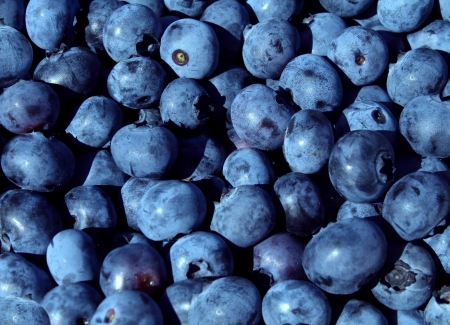 Photo for Blueberries blue fruit background for a natural and healthy eating concept as a blueberry nature symbol of a health focused lifestyle with fresh berry food that is high in vitamins and antioxidants  - Royalty Free Image