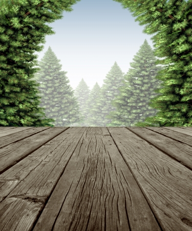Winter forest frame scene on old weathered wood patio deck with a view of a wintery forest of green pine trees on a cold day as a symbol of the festive seasonal holiday in nature