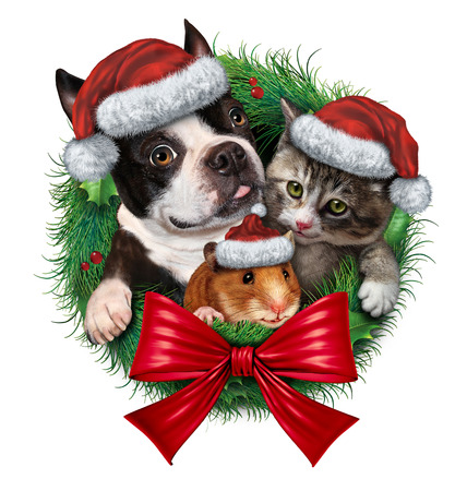 Pets holiday wreath with a dog cat and hamster wearing Christmas hats as a symbol of veterinary medicine and pet store or animal adoption issues during the winter season celebration on a white background