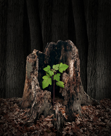 Photo pour New development and renewal concept as a hollow old rotting tree stump with a growing green sapling emerging and replacing the past as metaphor for revival in business and in life and a symbol of hope with a vibrant  future  - image libre de droit