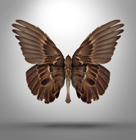 Photo pour Change and adaptation concept with a an open wing bird shaped as a butterfly as a surreal symbol of new breed creative thinking and freedom in changing to adapt to new challenges in business and life  - image libre de droit