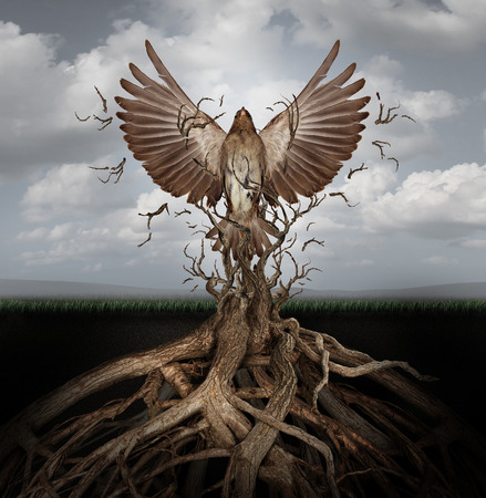 Foto de New life breaking free as a concept for freedom and power as the rise of the phoenix to be reborn and overcome challenges rising from entangled tree roots as a success symbol of hope. - Imagen libre de derechos