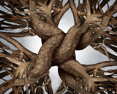 Foto de Unity symbol as an eternal knot of trust made from the roots and trunks of growing trees as a community or business friendship concept - Imagen libre de derechos
