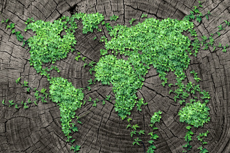 Global spread concept and development as a business concept with a map of the world made of an organized group of persistent vine leaves growing on a dead tree trunk as an environmental conservation symbol and icon for renewal.