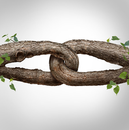 Photo pour Strong chain concept connected as two different tree trunks tied and linked together as an unbreakable chain as a trust and faith metaphor for dependence and reliance on a trusted partner for support and strength. - image libre de droit