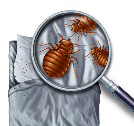 Photo pour Bed bug or bedbug infestation concept as a magnification close up of  parasitic insect pests on a pillow and under the sheets as a hygiene symbol and metaphor for inspection and danger of bloodsucking parasites living inside a mattress. - image libre de droit