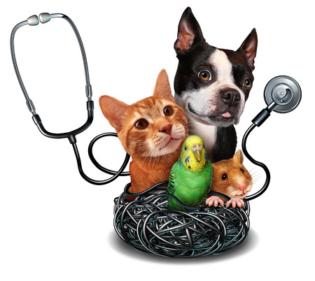 Veterinary care and pet medicine concept as a group of domesticated animals as a cat dog hamster and bird as a symbol for veterinarian medical healthcare and health insurance for pets.