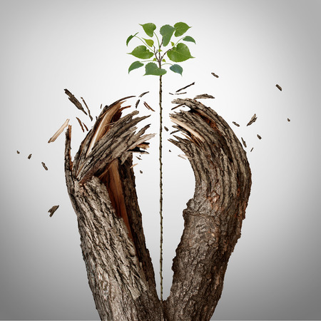 Foto de Breaking through concept as a green sapling growing upward and destroying a tree barrier as a business success metaphor for potential ambition and strong will to succeed. - Imagen libre de derechos