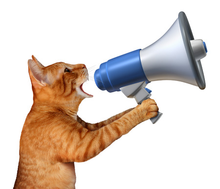 Photo for Cat announcement concept as a generic feline holding a bullhorn or megaphone to announce news or promote pet and veterinary issues or animal marketing and promotion isolated on a white background. - Royalty Free Image