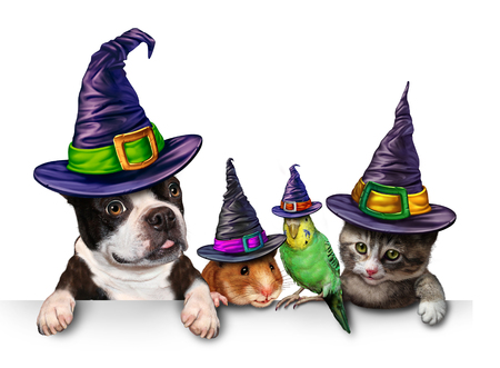 Halloween Pet blank sign with a fun cat happy dog cute hamster and budgie each wearing a witch hat head garment as an autumn seasonal symbol for funny pets in costume.