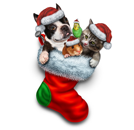 Pet holiday stocking and Christmas animals group in a red festive sock for veterinary medicine and pet store or animal adoption during winter holidays as a cute dog hamster bird and a cat with a santa haton a white background.