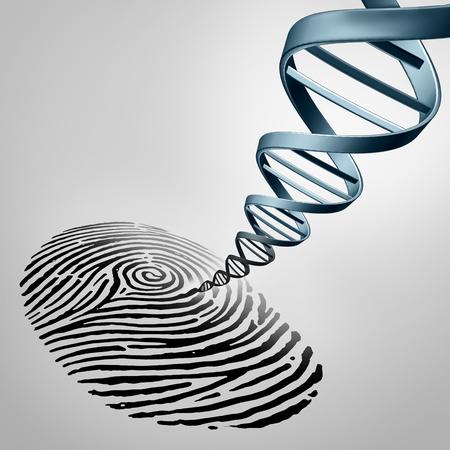 Foto de Genetic fingerprinting as a fingerprint with DNA emerging out as a medical identification symbol for a paternity test or biotechnology genome icon. - Imagen libre de derechos