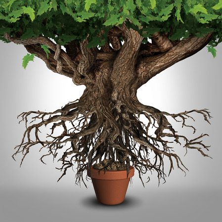 Photo for Business expansion and too big to manage business that does not fit metaphor or expanding outgrowing your home concept as a large tree  with a small plant pot as an icon for managing growth success - Royalty Free Image