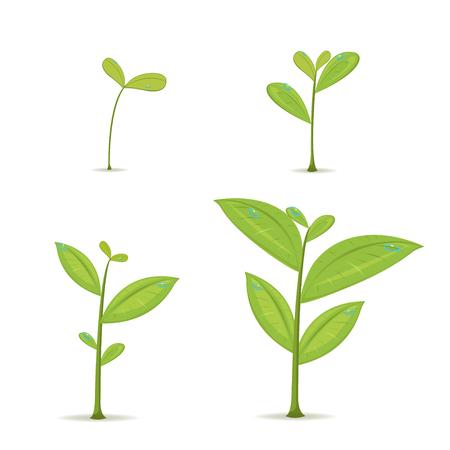 Illustration pour Plant Green Leaf Grow Set Vector - image libre de droit