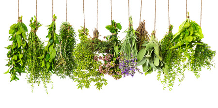 Photo pour herbs hanging isolated on white background. food ingredients - image libre de droit