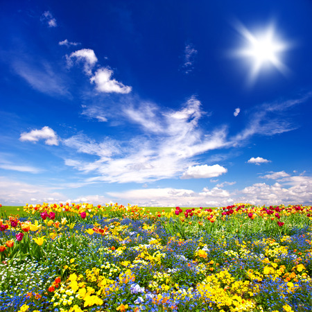 Foto de beautiful flowers meadow and cloudy blue sky. nature landscape - Imagen libre de derechos