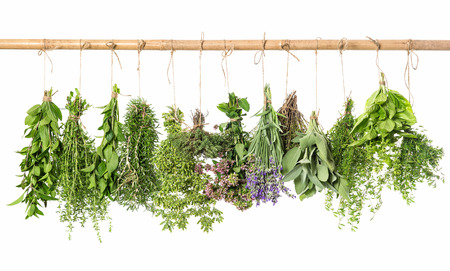Photo pour fresh herbs hanging isolated on white background. thyme, mint, basil, rosemary, sage, oregano, marjoram, savory, lavender - image libre de droit