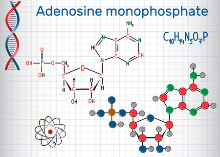 Illustration pour Adenosine monophosphate (AMP) molecule, it is an ester of phosphoric acid and the nucleoside adenosine monomer in the production RNA. Sheet of paper in a cage. Structural chemical formula and molecule model. Vector illustration. - image libre de droit
