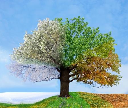 Foto de Four season tree - Imagen libre de derechos