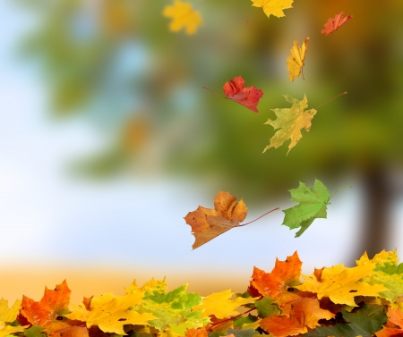 Photo for autumn leaves - Royalty Free Image