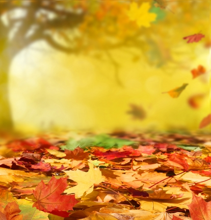 Photo for autumn background - Royalty Free Image