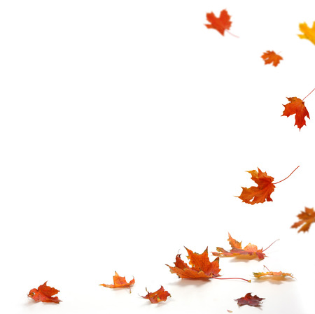 Photo for Isolated autumn leaves  - Royalty Free Image