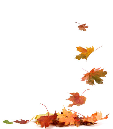 Photo pour Isolated autumn leaves - image libre de droit