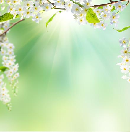 Photo pour spring background  - image libre de droit
