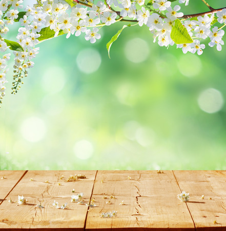 Photo for spring background with wooden planks  - Royalty Free Image