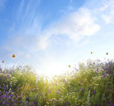 Photo for summer landscape - Royalty Free Image