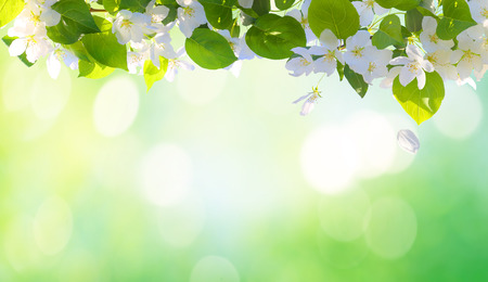 Photo for Spring blossom background - Royalty Free Image