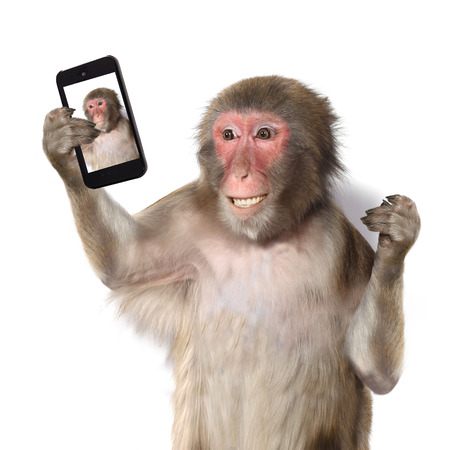 Photo pour Funny monkey taking a selfie and smiling at camera - image libre de droit